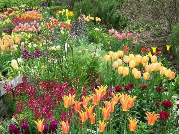 Уход за клумбами и цветниками весной
