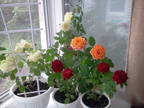 vyrashhivanie cvetov